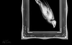 This is how a diving bird makes itself streamlined. | 17 Terrifying X-Rays That Will Forever Change The Way You Look At Animals