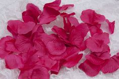 Silk Rose Petals (500 pcs) -  Fuchsia ● As Low as $2.99 ● Available from www.cvlinens.com