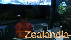 Zealandia: The Exhibition, Wellington city On our third day in Wellington, we went to Zealandia. There is a free shuttle van transport that drops off/picks u. Wellington City, Exhibition Room, The Visitors, Capital City, New Zealand
