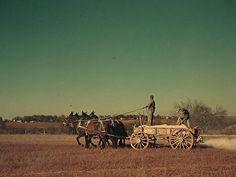 ca. 1940   Georgia oat field? Southern U.S.