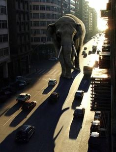 ♂ Dream imagination surrealism elephant on city street