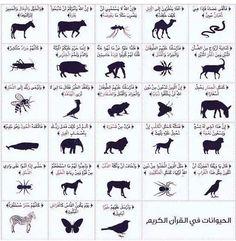 #الحيوانات التي ذكرت في #القرأن_الكريم  #معلومة قيمة لكل #معلمة و #معلم