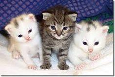 Resultat d'imatges de gats petits
