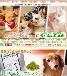 犬と猫の健康をサポートするサプリメントや健康器具専門店『犬と猫の救急箱』|DENKAN ペットショップ&ペットアイテム通販