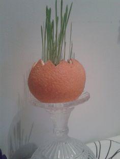 Pääsiäisen rairuoho / ohraruoho appelsiinissa..