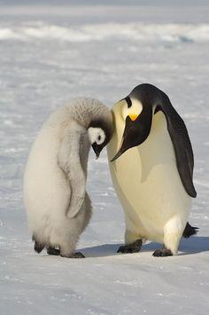 Maman, j'ai tellement de peine, tellement de peine...si tu savais comment je me sens seule...