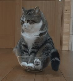 Maru finds his time in the mixing bowl exhausting !!