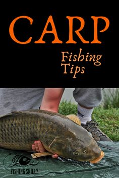 Huge article with a ton of carp fishing tips. From carp fishing rigs to the best bait for carp. Huge article with a ton of carp fishing tips. From carp fishing rigs to the best bait for carp. Walleye Fishing Lures, Carp Fishing Tips, Carp Fishing Bait, Fishing Rigs, Fishing Guide, Magnet Fishing, Fishing Vest, Fishing Boats, Ice Fishing