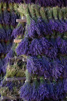 Lavender garden, lavender fields, lavender flowers, cut flowers, flower ins Lavender Bouquet, Lavender Flowers, Cut Flowers, Purple Flowers, Potted Lavender, Lavander, French Lavender, Lavender Blue, Lavender Fields