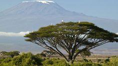 Climb Mount Kilimanjaro!