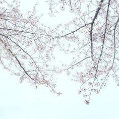 【aritoshi_2】さんのInstagramをピンしています。 《. 紅葉が待ち遠しい . .  #写真#一眼#カメラ#camera#ファインダー#fujifilm#photo #aritoshicamera#写真撮っている人と繋がりたい#一眼レフ#撮影#ファインダー越しの私の世界#fujifilmxt10 #RECO_ig#フィルムに恋してる#ig_japan#team_jp_#女子旅#カメラ女子#カメラ女子部#カメラ部#桜#春#秋#ないものねだり#春夏秋冬》