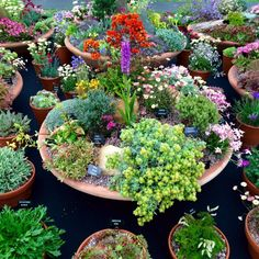 Love your pots! 25 inspiring & practical ideas for container gardens - The Middle-Sized Garden Plant alpines and sempervivums in shallow containers - There's a huge trend towards planting alpines and sempervivums in shallow bowls