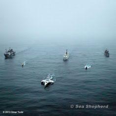 Sea Sheperd fleet! one day I will join you guys. In Sha Allah (:
