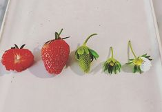 The lives and times of my strawberries Strawberries, Great Recipes, Times, Fruit, Cooking, Food, Cucina, Strawberry Fruit, Kochen