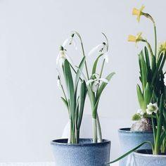 Hallo Frühling  . Hallo Montag Hallo neue Woche und Hallo ihr lieben Insta-Leute  Mag man bei dem Wetter gar nicht glauben dass nun hoch offiziell der Frühling da ist. Dann also Tschüß Winter ich mag dich ja auch sehr! Wir sehen uns  . . Hello spring... . . . #spring #springtime #été #frühling #feelslikespring #springisintheair #flowers #flowermagic #flowerpower #flowerslovers #flowerstagram #instaflowers #flowersofinstagram #flowersmakemehappy #flowerstyling #flowerblogger…