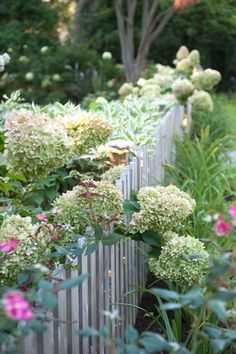 white picket fence and hydrangeas