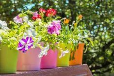 9 Aγαπημένα λουλούδια για μπαλκόνι με ήλιο & πώς να τα φροντίσεις!