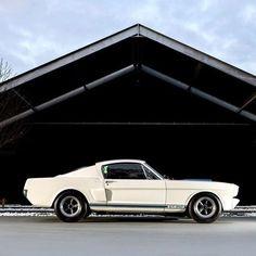 Mustang Fanatic