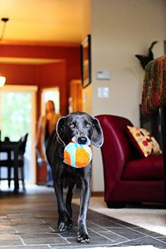 Chuckit! Indoor Ball   Check it out-->  http://mypets.us/product/chuckit-indoor-ball/  #pet #food #bed #supplies