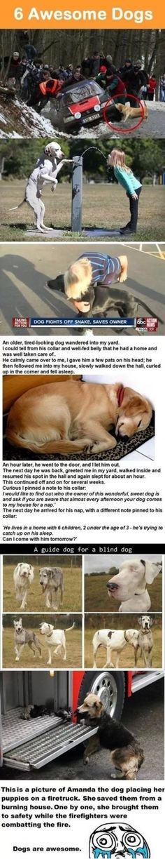 The napping doggy...and the Momma who rescued her puppies...I teared up a little.