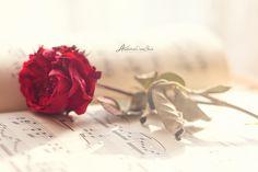 Musicale. by andokadesbois.deviantart.com on @deviantART