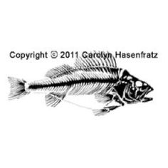 Mounted Rubber Stamp  Skeletal Fish by CarolynsStampStore on Etsy, $4.96 https://www.etsy.com/listing/118341998/mounted-rubber-stamp-skeletal-fish