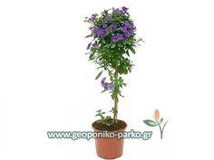 Gardening, Decoration, Plants, Decor, Lawn And Garden, Decorations, Plant, Decorating, Dekoration