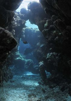 Image detail for -Sunbeams tthrough holes in underwater caves Red Sea, Egypt Underwater Caves, Underwater Creatures, Underwater World, Underwater Photography, Nature Photography, Life Under The Sea, Oceans Of The World, Nature Water, Am Meer