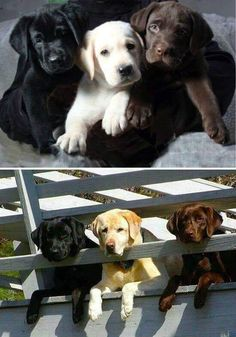 Post with 1499 votes and 84765 views. Tagged with aww, theyregooddogsbrent; Shared by LucyBelle. Cute Animal Memes, Cute Funny Animals, Cute Baby Animals, Cute Dogs And Puppies, Pet Dogs, Pets, Pet Puppy, Doggies, Rottweiler Puppies