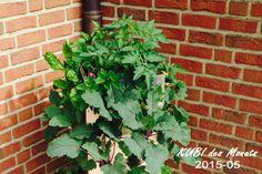 KUBI, ein vertikales Hochbeet für Balkon und Terrasse. Mit integriertem Kompostiersystem und Wasserspeicher! Ein ganzer Garten auf 1m², für jede Lebenssituation. Entwickelt für das Wesentliche am Gärtnern – Freude am Wachstum. #KUBI #vertical #hochbeet #balkon #ökologie