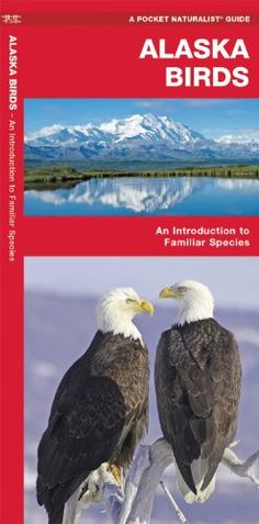 Alaska Birds: An Introduction to Familiar Species (State Nature Guides)