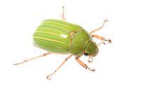 Jewel scarab | por ggallice