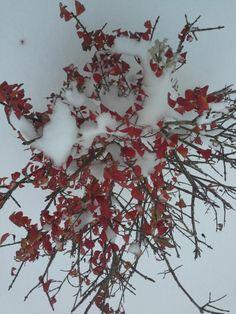 """""""Deborrahann59@yahoo.com"""" by Deborrah Ann Stenberg on PhotographySites.com"""