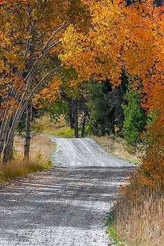 Dirt or gravel roads = Country! somedays I take a wrong turn home on purpose! Country Life, Country Roads, Autumn Scenery, Back Road, Take Me Home, Landscape Photos, Pathways, Beautiful Places, Celestial
