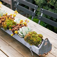 Costa Mesa garden designer Molly Wood fills vintage metal chicken feeders with tiny succulents for a rustic centerpiece. Hen and chickens (Sempervivums), echeverias, and a dainty stonecrop grow in cactus mix in a 4 trough. Suculentas Interior, Suculentas Diy, Cactus Y Suculentas, Succulents In Containers, Cacti And Succulents, Planting Succulents, Planting Flowers, Cactus Plants, Container Flowers