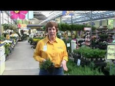 How to Grow Herbs with Stauffers of Kissel Hill Garden Centers. www.skh.com