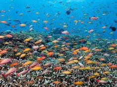 Diving the Great Barrier Reef: 15 Breathtaking Photos - Condé Nast Traveler Visit Australia, Australia Travel, Great Barrier Reef Australia, National Geographic, Cozumel Scuba Diving, Fauna Marina, Airlie Beach, Maui Vacation, Dream Vacations