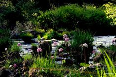 Isn't it just like Mother Nature to plant a flower garden along the edge of a stream?  www.plumascounty.org photo by Mike Nellor
