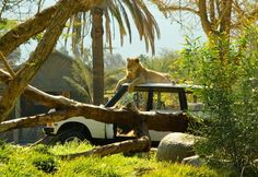 Visit San Diego Zoo Safari Park, California - Bucket List Dream from TripBucket