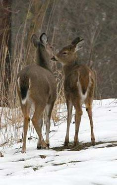 Land of Natural Resources — A Winter's Afternoon, Ohio Two's Company, Winter's Tale, Oh Deer, Winter Pictures, Natural Resources, Winter Landscape, Beautiful Scenery, Pet Birds, Ohio
