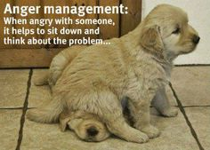 Anger Management, golden style ...........click here to find out more http://googydog.com