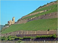 Fotografía: Marcela Villarino  Rhein Munich, Elba, Monument Valley, Nature, Travel, Monuments, Museums, Cruise, Venice