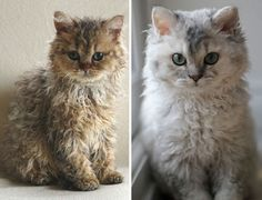 Meet Hosico RealLife Puss In Boots Real Life Cat And Kitty - Hosico the cat is pretty much the real life puss in boots