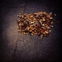 채 자연으로 돌아가지 못한 자연... #낙엽 #fallenleaves