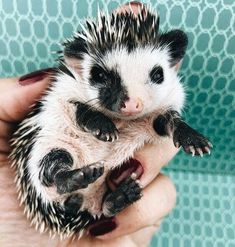 15 Amazing Facts About Hedgehogs – Cute Animals Cute Little Animals, Cute Funny Animals, Cute Dogs, Cute Babies, Cool Pets, Cute Creatures, Beautiful Creatures, Animals Beautiful, Hedgehog Pet