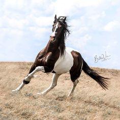"911 gilla-markeringar, 3 kommentarer - Horse (@horseloversfc) på Instagram: ""Enjoying the freedom.... l .  ⤵  Tag a fishing Lover and Follow @horseloversfc for More ❤️ . …"""