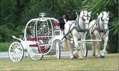 Horse drawn carriages are cute