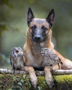 https://www.instagram.com/p/BJgT_EyBhLE/?taken-by=wildlifeplanet