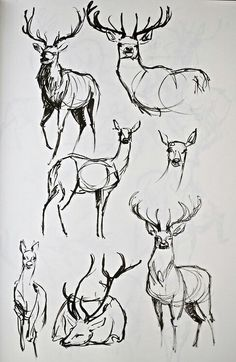 As the deer pants for the water. - if I could get someone to convert this into. - A Tiere zeichnen - Animal Sketches, Animal Drawings, Art Sketches, Art Drawings, Drawing Animals, Tattoo Sketches, Illustration Art, Illustrations, Poses References
