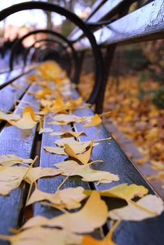 Autumn in New York by NewYorkMuhtari
